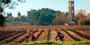 Guided Tour Penedes