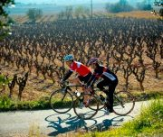 The Vineyards and Wineries tour of Penedes (Barcelona)